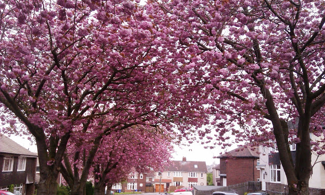 Cherry Tree Sheffield
