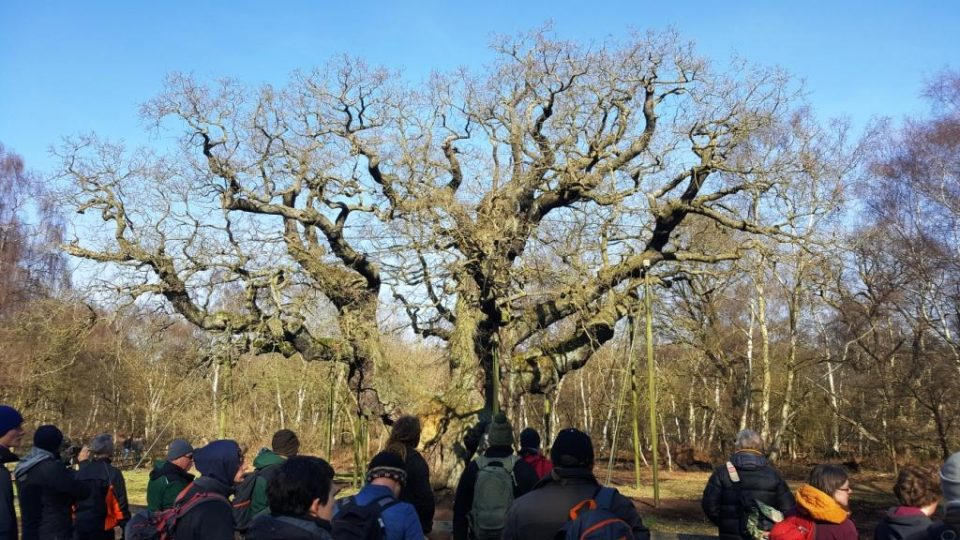 Arboriculturists around the Major Oak