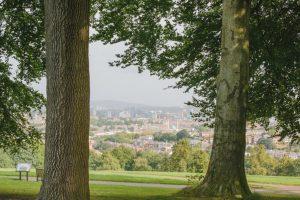 Sheffield Trees