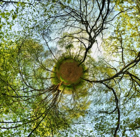 Trees-in-the-age-of-coronavirus